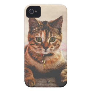 Cute Young Tabby Cat Kitten Kitty Pet iPhone 4 Cover