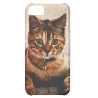 Cute Young Tabby Cat Kitten Kitty Pet iPhone 5C Cases
