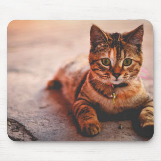 Cute Young Tabby Cat Kitten Kitty Pet Mouse Pad