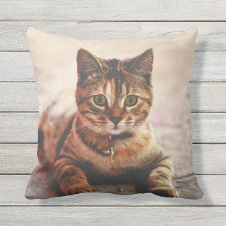 Baby kitty pillow 44