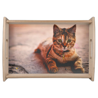 Cute Young Tabby Cat Kitten Kitty Pet Serving Tray