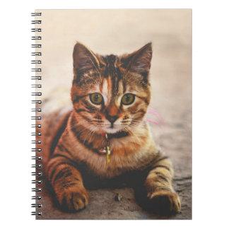 Cute Young Tabby Cat Kitten Kitty Pet Spiral Notebooks