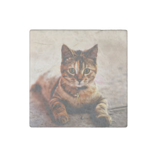 Cute Young Tabby Cat Kitten Kitty Pet Stone Magnets