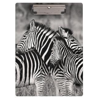 Cute Zebra Herd Nature Safari Black White Clipboard