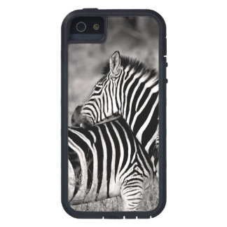 Cute Zebra Herd Nature Safari Black White iPhone 5 Case