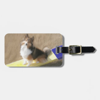 CuteShetland Sheepdog sitting on a teeter Luggage Tag