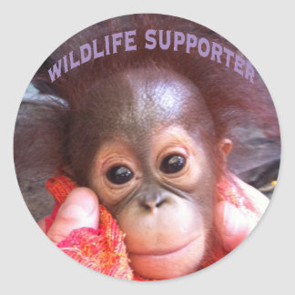 Cutest Baby Orangutan Orphan Classic Round Sticker