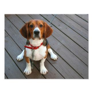 "Cutest Beagle Dog Ever 4.25"" X 5.5"" Invitation Card"