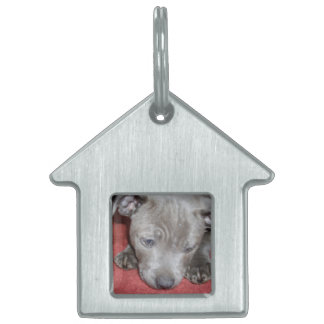 Cutest_Blue_Staffy_Puppy,_Kennel_Dog_Tag Pet ID Tag