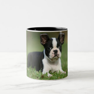 Cutest Boston Terrier photo mug