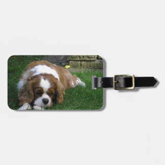 Cutest Dog In The World Is Hungry Luggage Tag