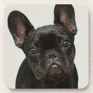 Cutest French Bulldog Puppy Coaster