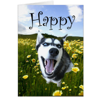 Cutest Husky Dog Happy Birthday Card