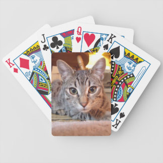 Cutest Kitten Playing Cards