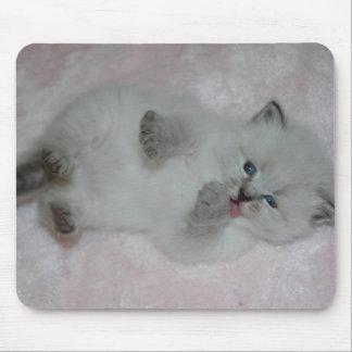 Cutest SibKitten Mousepad - Customized