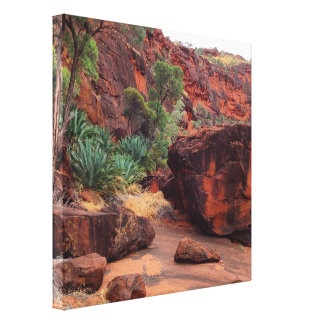 Cycad Gorge canvas print