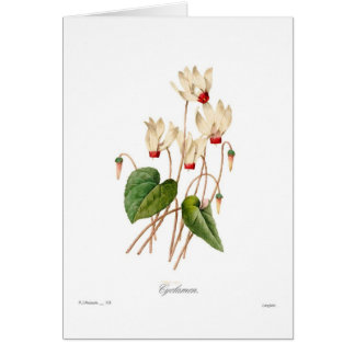 Cyclamen Card
