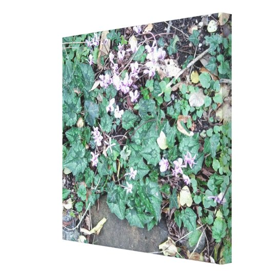 Cyclamen Photo 769 Canvas Print