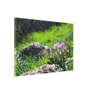 Cyclamen spring canvas