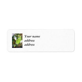 Cydney Yellow Naped Parrot Return Address Label