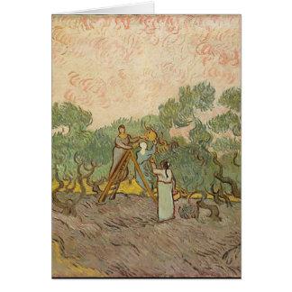 Cypress Grove Card