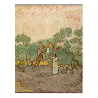 Cypress Grove Postcard