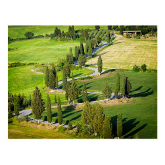 Cypress lined winding road in Tuscany postcard