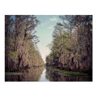 Cypress Swamp : Louisiana Postcard