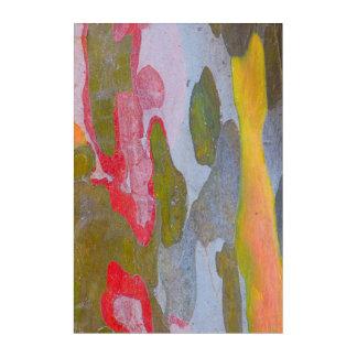 Cypress tree bark patterns, Italy Acrylic Print