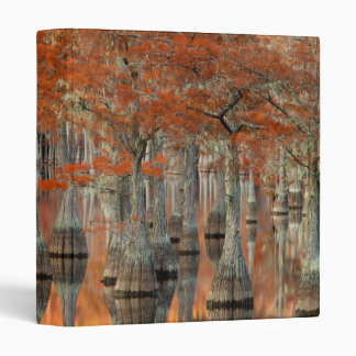 Cypress Trees | George Smith State Park, Georgia Binder