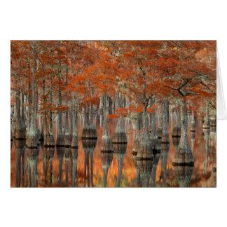 Cypress Trees | George Smith State Park, Georgia Card