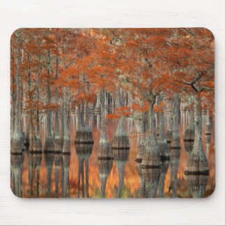 Cypress Trees   George Smith State Park, Georgia Mouse Pad