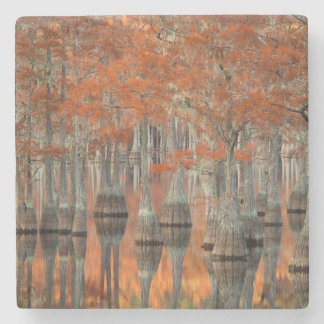 Cypress Trees | George Smith State Park, Georgia Stone Coaster