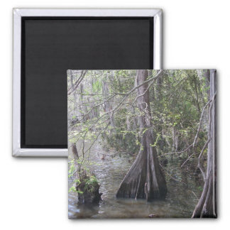 Cypress Trees Magnet