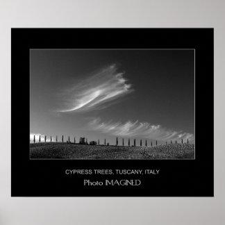CYPRESS TREES, TUSCANY, ITALY POSTER
