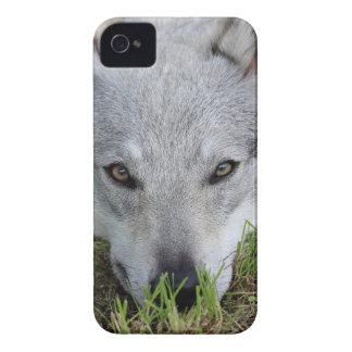 Czechoslovakian Wolfdog iPhone 4 Covers