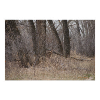 D0001 Whitetail Deer Poster