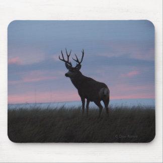 D0003 Mule Deer Buck Sunrise Buck Mouse Pad