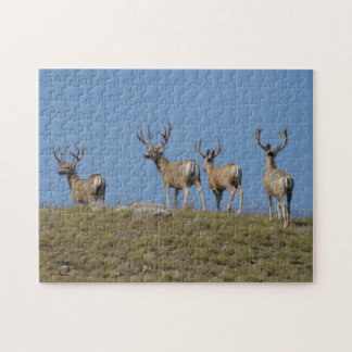 D0009 Mule Deer Bucks Jigsaw Puzzle