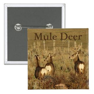 D0030 Mule Deer Bucks 2 Inch Square Button