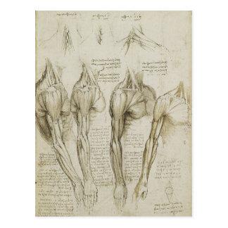 Da Vinci's Human Skeleton Anatomy Sketches Postcard