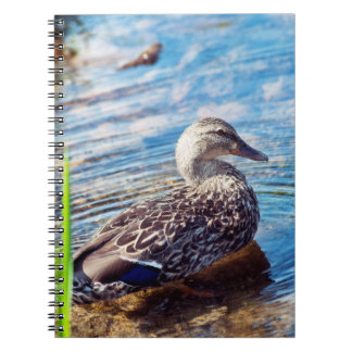 Dabbling Ripples Spiral Notebook