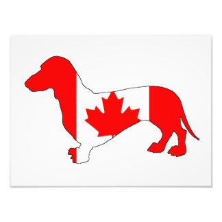 Dachshund Canada Photo