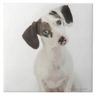 Dachshund/Chihuahua female puppy Tiles
