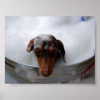 Dachshund in Tub Poster