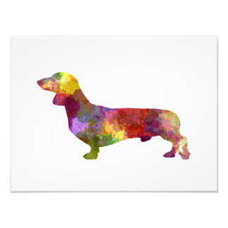 Dachshund in watercolor 2 photo print
