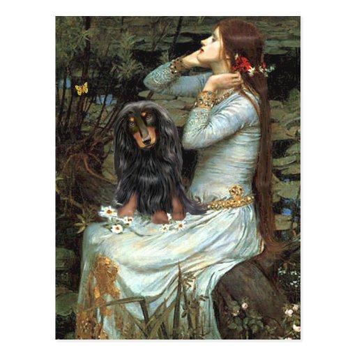 Dachshund (LH-BT) - Ophelia 2 Postcard