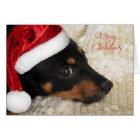 Dachshund Merry Christmas Card