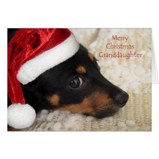 Dachshund Merry Christmas Granddaughter Card