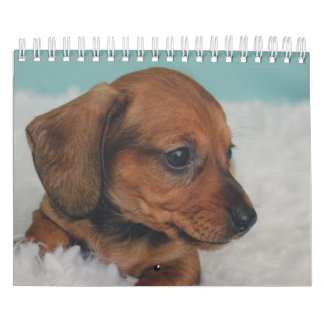 Dachshund Puppies Calendars